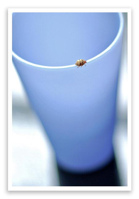 ashgrayladybug1