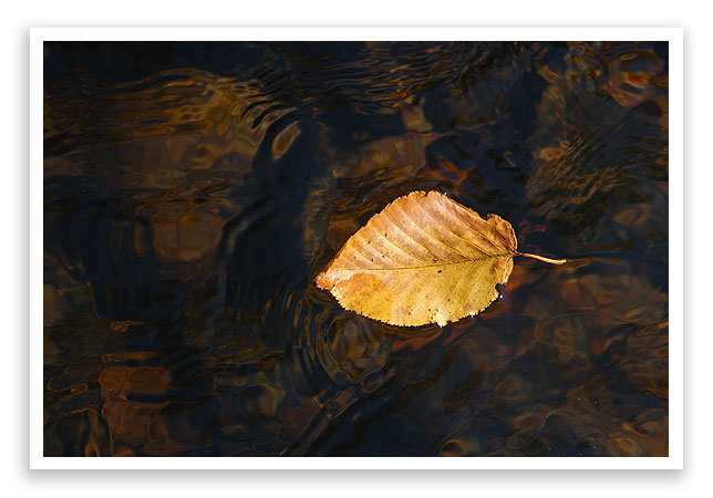 fallleafcolor11