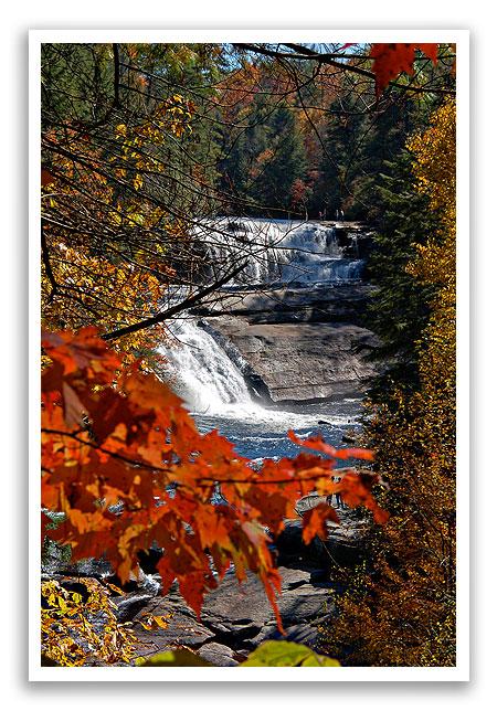 fallleafcolor2