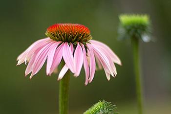 flowers-featuredb