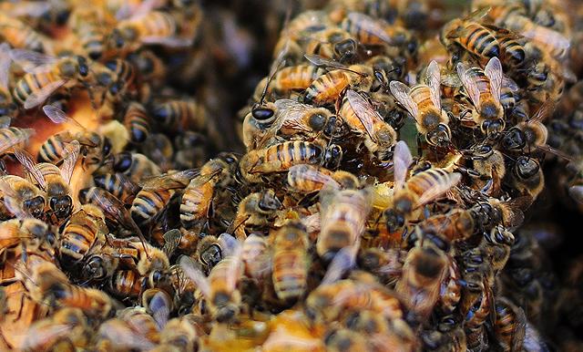 savannah-bee-tour-slider