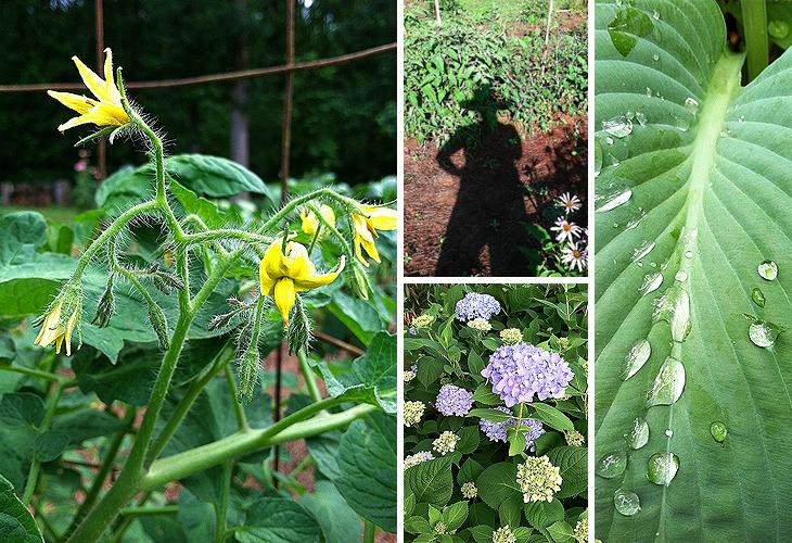 master gardening observations