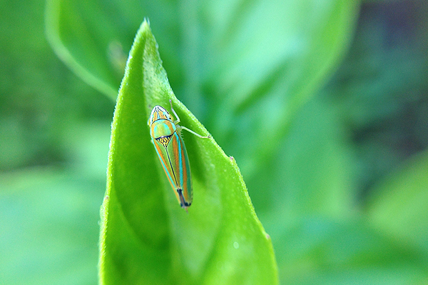 A bug's life: Photography fun with the olloclip.