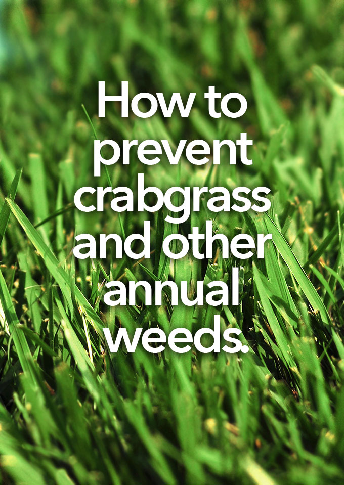 prevent crabgrass and other annual weeds