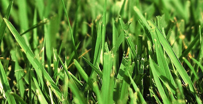 How to Prevent Crabgrass and Other Annual Weeds