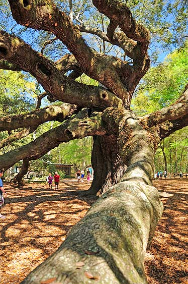 angel oak charleston sc