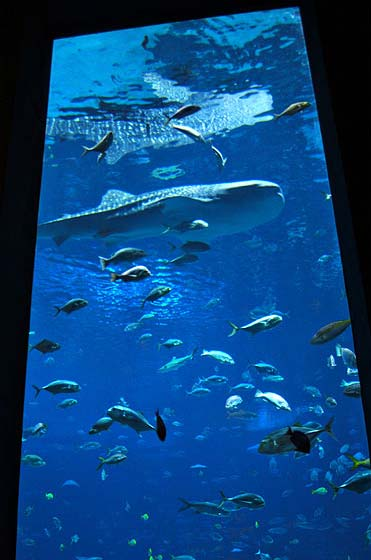 Under The Sea At The Georgia Aquarium