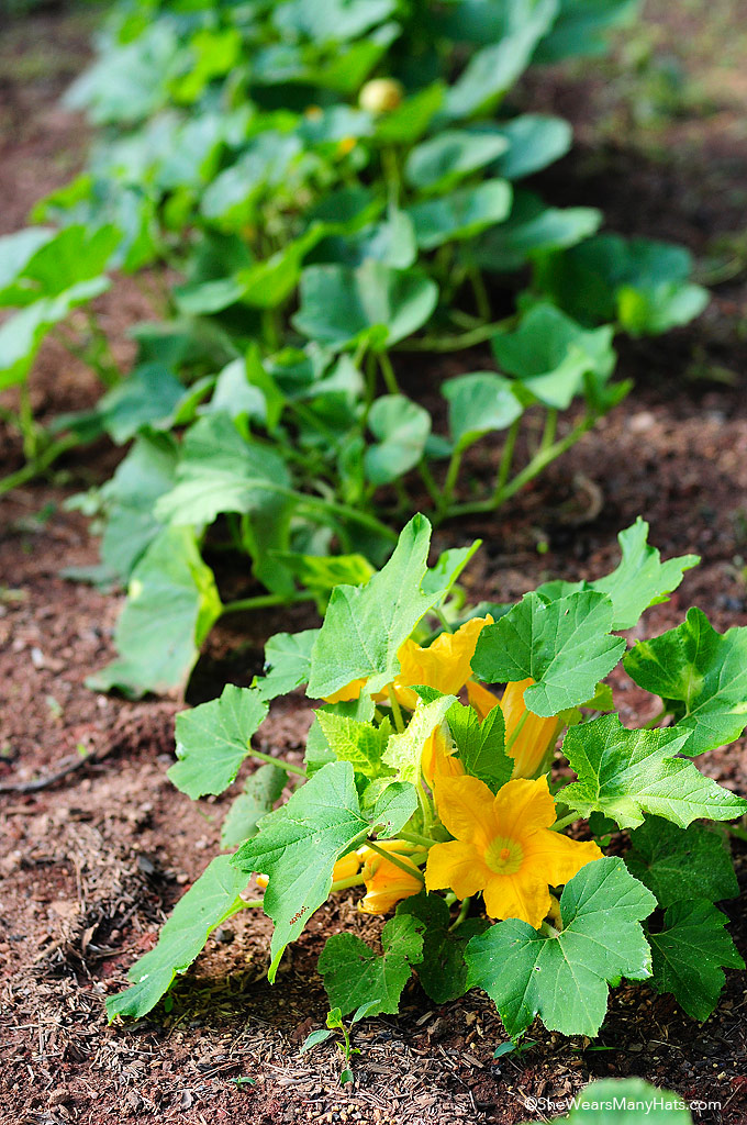 How to prevent invasive pests with tips from Hungry Pests